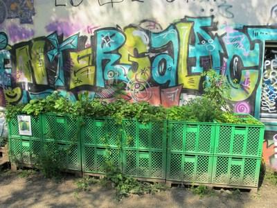Kisten vor Graffiti (Kopie)