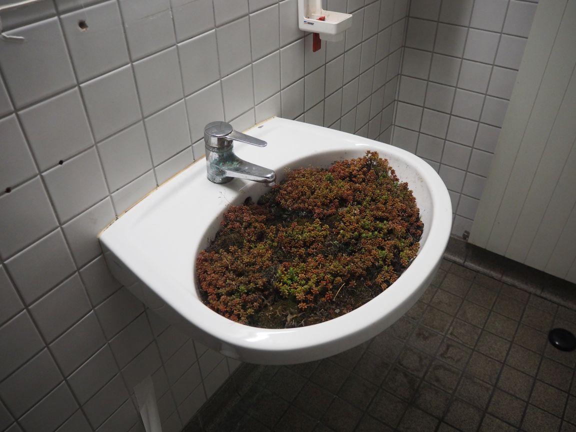Pflanzenwaschbecken
