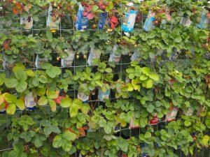 Erdbeeren in Tetrapacks