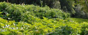 Waldschmausgarten