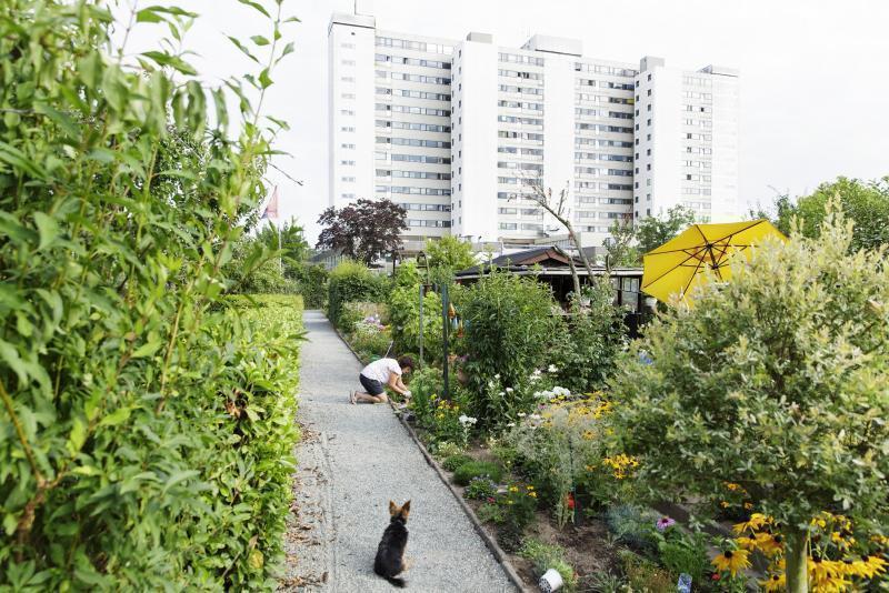 Gärten vor Hochhaussiedlung